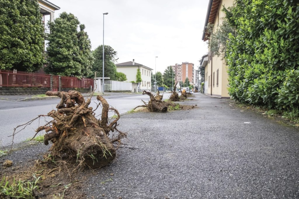 alberi abbattuti via sauro